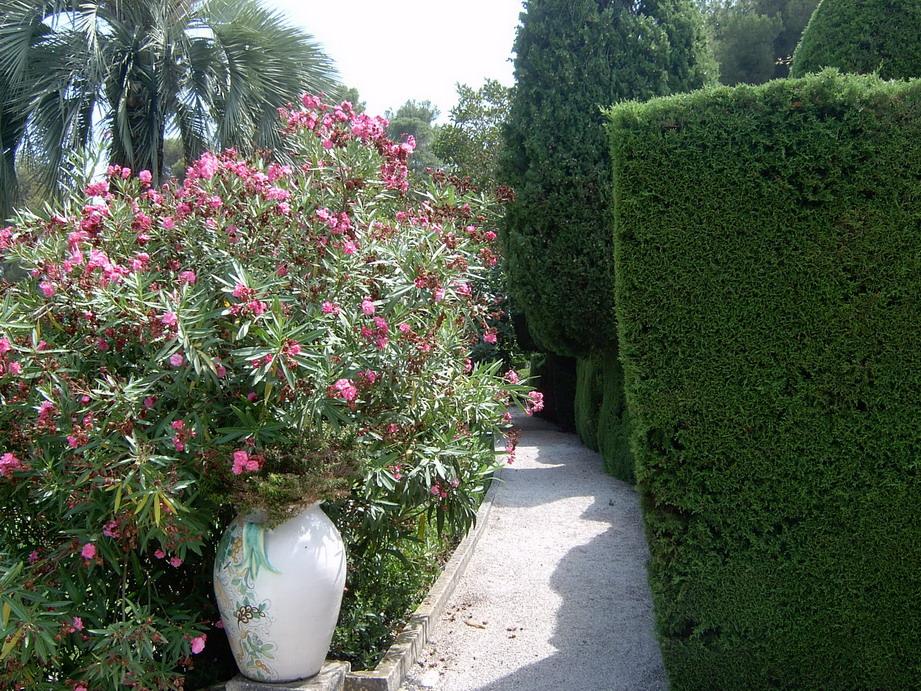 My plants for Plant de villa